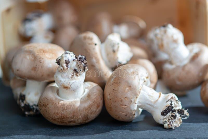 Свежие органические коричневые champignons каштана от подземных пещер в Бельгии стоковые изображения rf
