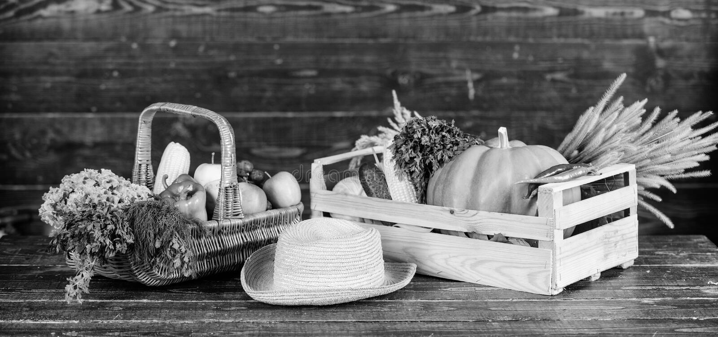 Свежие органические овощи плетеная корзина Концепция сбора осени Осенний урожай овощей Местно выращенный натуральный стоковое фото rf