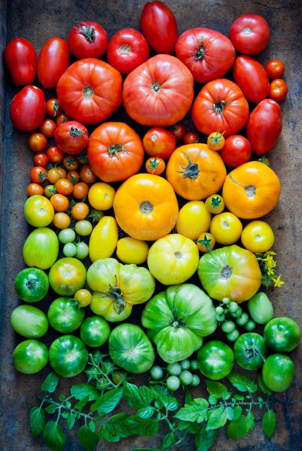 свежие органические томаты стоковая фотография rf