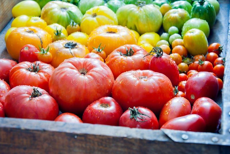 свежие органические томаты стоковое фото rf