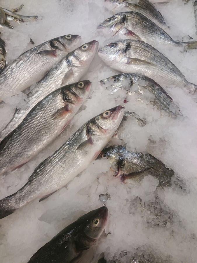 Свежие охлаженные рыбы лежа на льде Свежие рыбы в магазине стоковая фотография rf