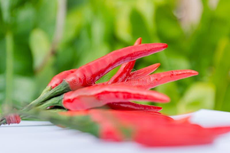 свежие перцы красные стоковая фотография rf
