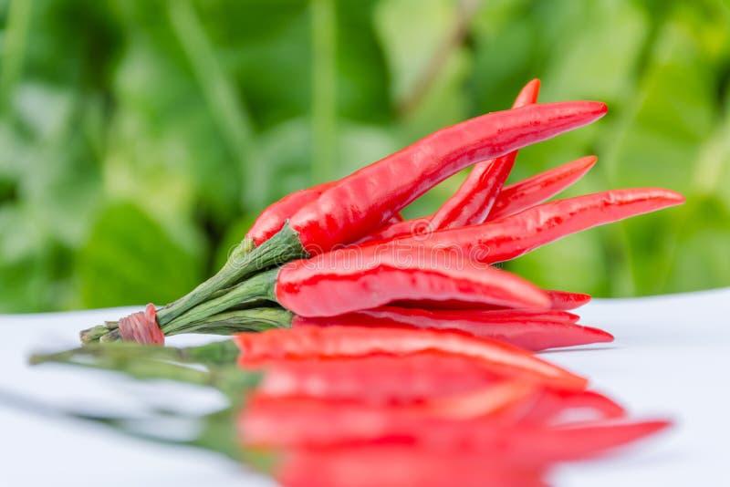 свежие перцы красные стоковое изображение