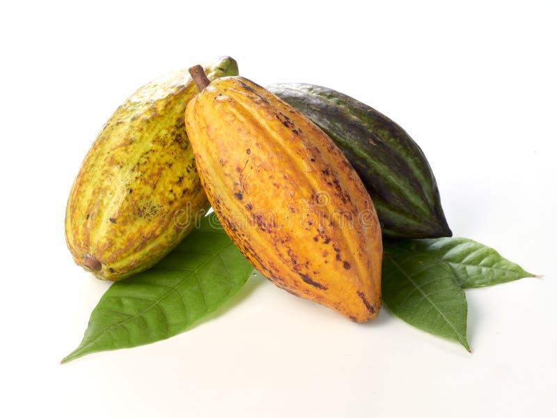 Свежие плоды какао с зелеными лист стоковые изображения rf