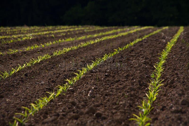 свежие ростки весны стоковое фото