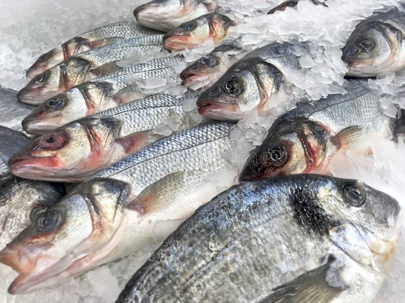 Свежие рыбы в крупном плане льда стоковая фотография