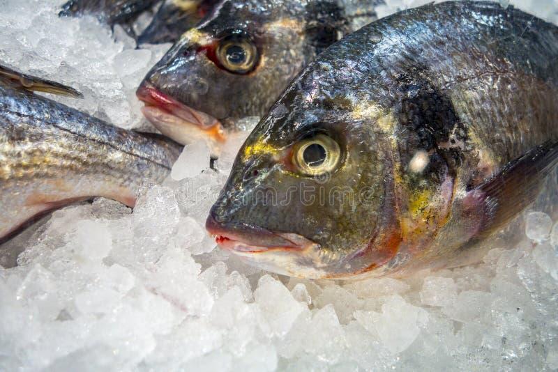 Свежие рыбы на льде на басе рынка стоковая фотография rf