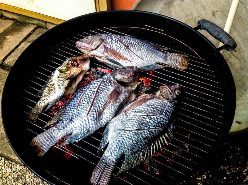 Свежие рыбы тилапии на гриле стоковые фото