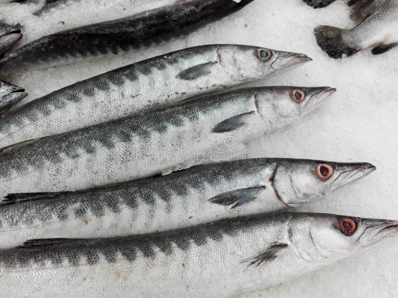 Свежие рыбы Seapike стоковая фотография rf