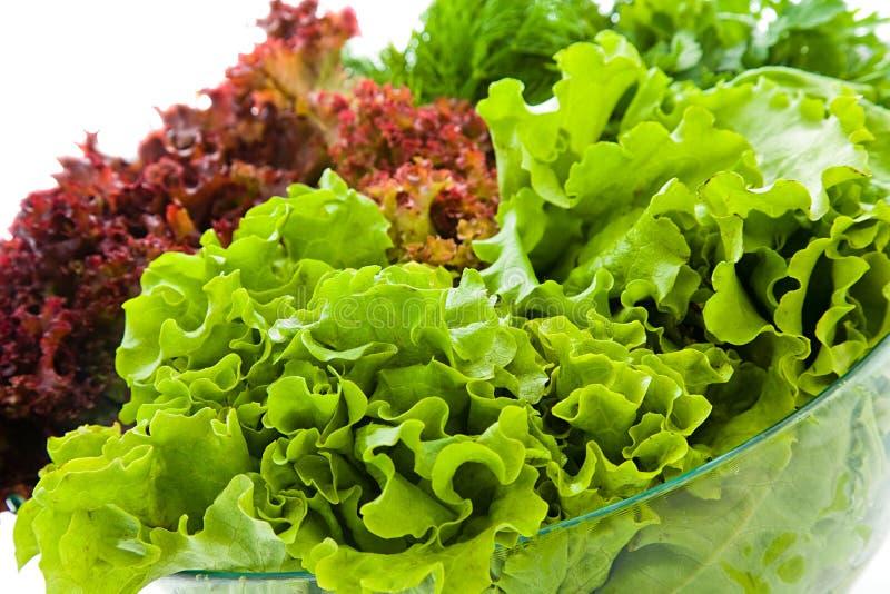 свежие салаты стоковое изображение