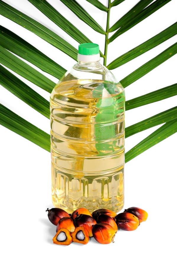 Свежие семена и пищевое масло пальмового масла с листьями стоковое фото
