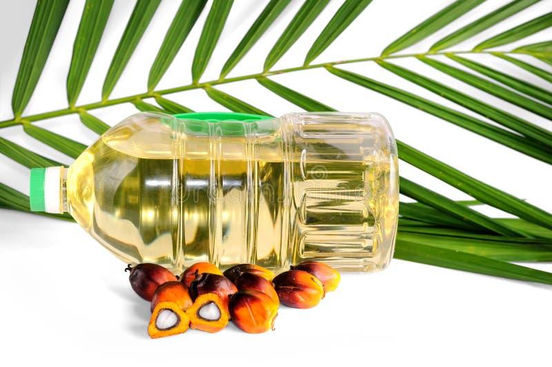 Свежие семена пальмового масла стоковые изображения