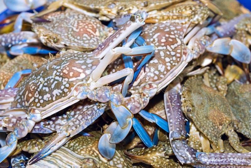 Свежие синие краби на экспозиции льда на рынке морепродуктов в тайском стоковое фото rf
