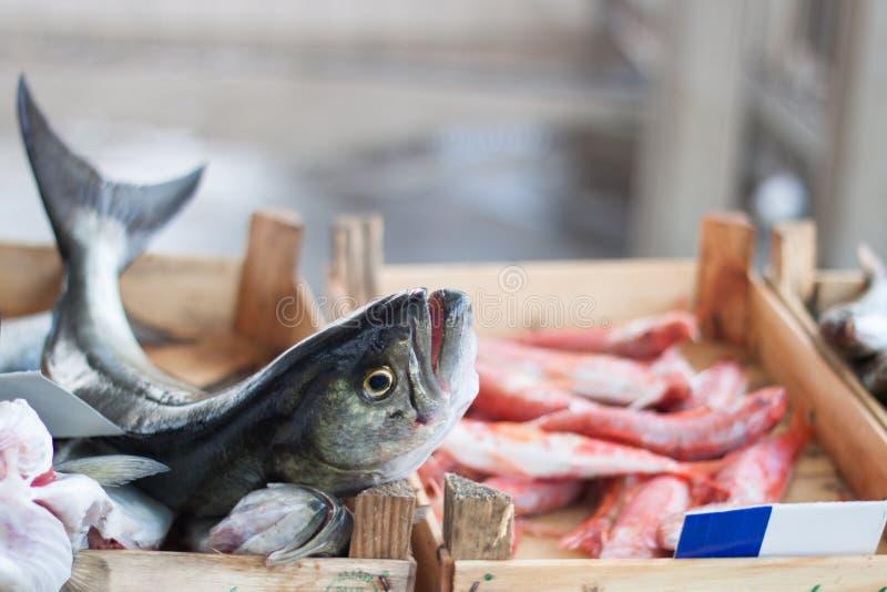 Свежие среднеземноморские рыбы стоковые фото