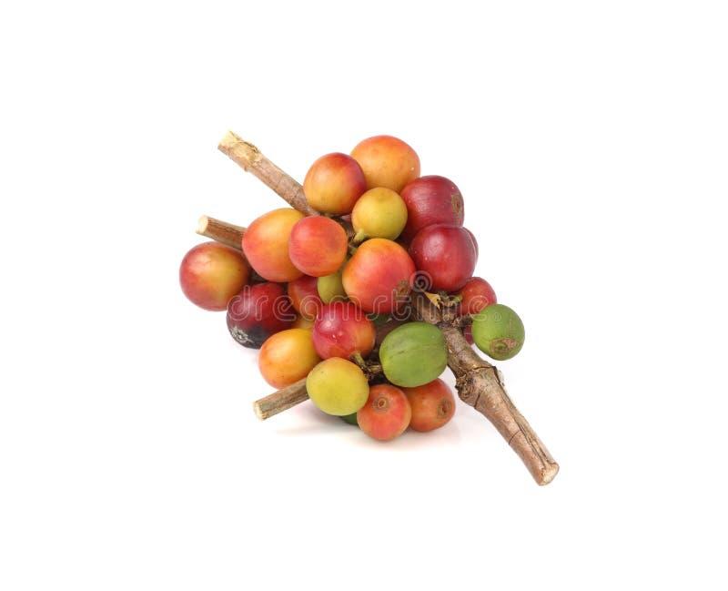 Свежие сырцовые кофейные зерна на белой предпосылке стоковые фотографии rf