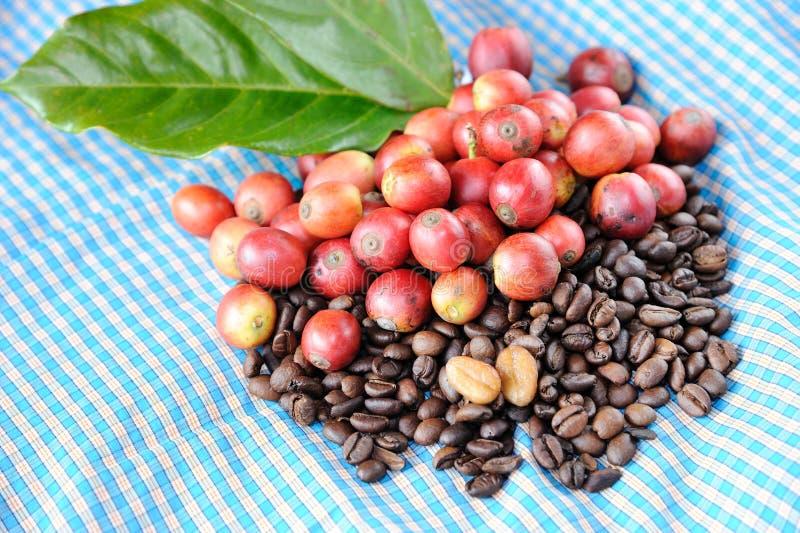 Свежие сырцовые кофейные зерна с листьями стоковое фото