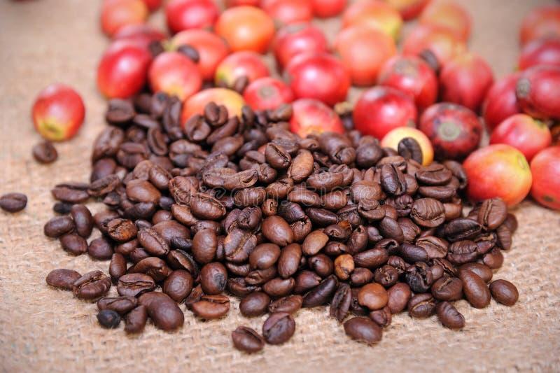 Свежие сырцовые кофейные зерна стоковые изображения rf