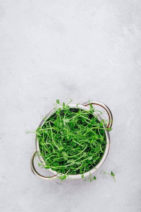 Свежие сырцовые органические всходы зеленого гороха в дуршлаге, взгляде сверху стоковая фотография rf
