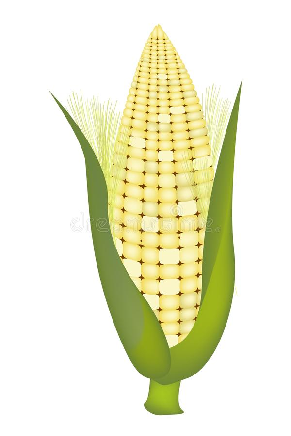 Свежие сладостные кукурузные початки с шелухой и шелком бесплатная иллюстрация
