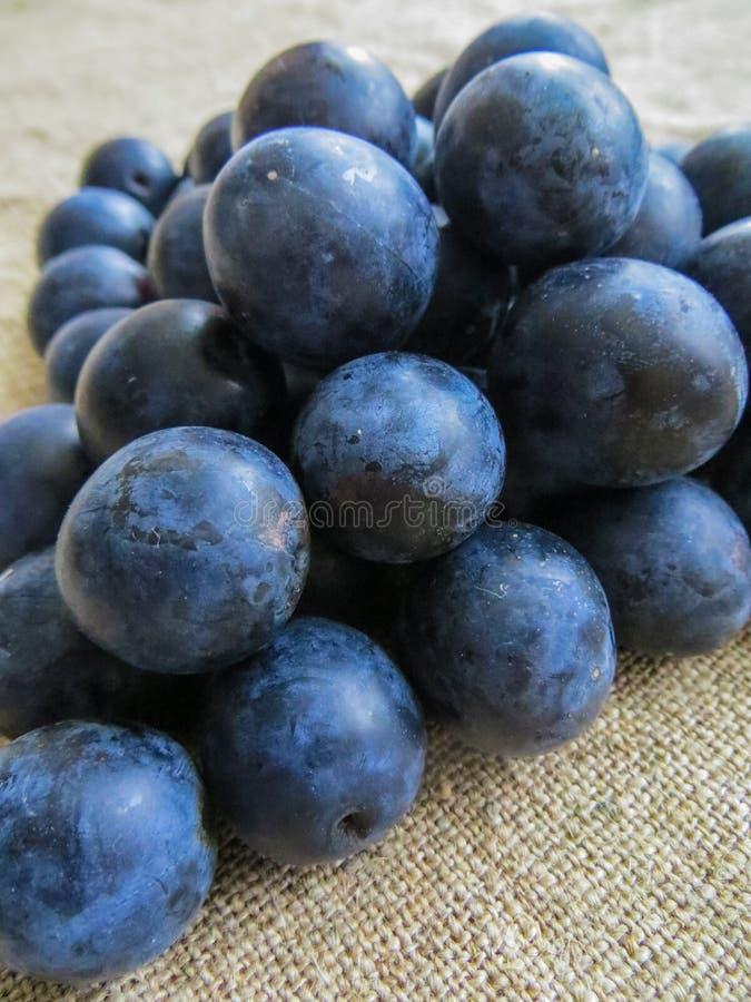 Свежие, темно-синие сливы разбросанные на таблицу стоковое фото rf