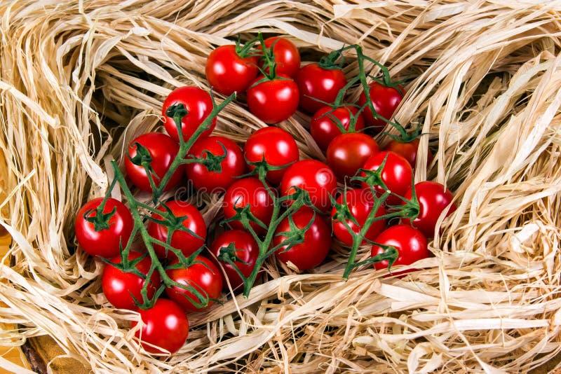 Свежие томаты вишни на соломе стоковое изображение rf
