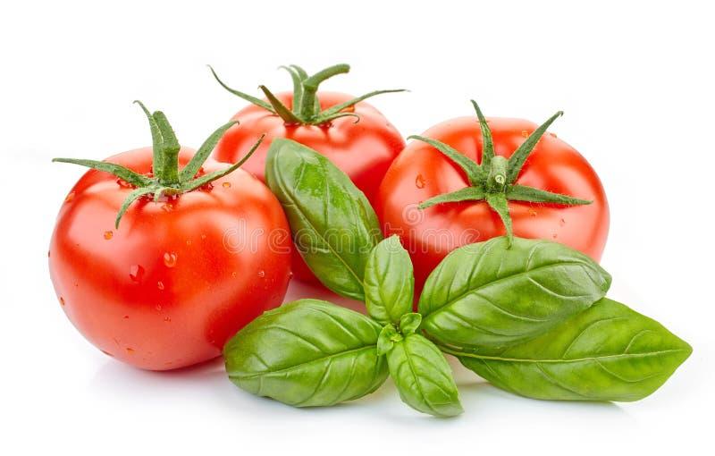 Свежие томаты и лист базилика стоковые фото