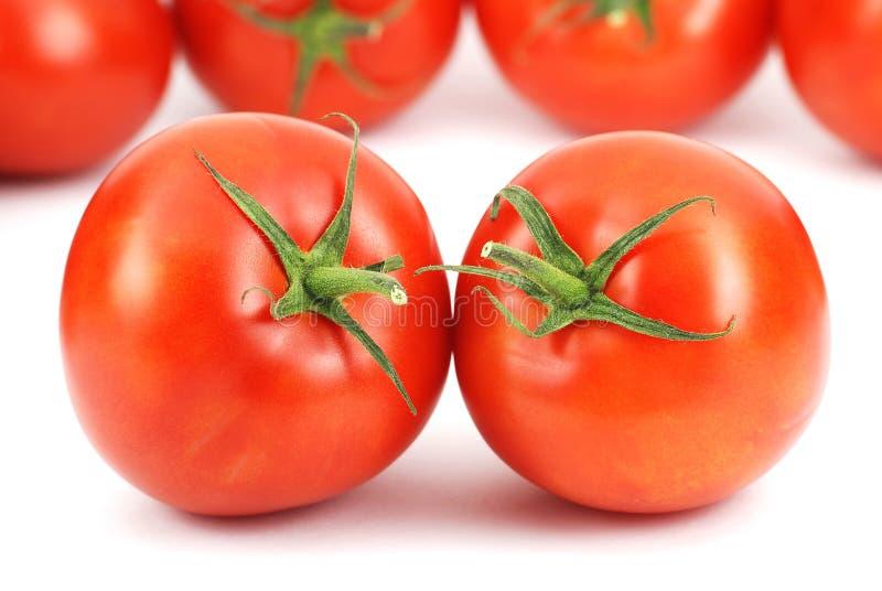 свежие томаты картины стоковые изображения rf