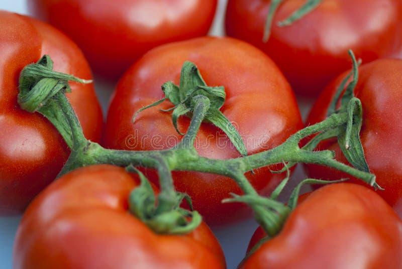 свежие томаты Тоскана стоковые фото