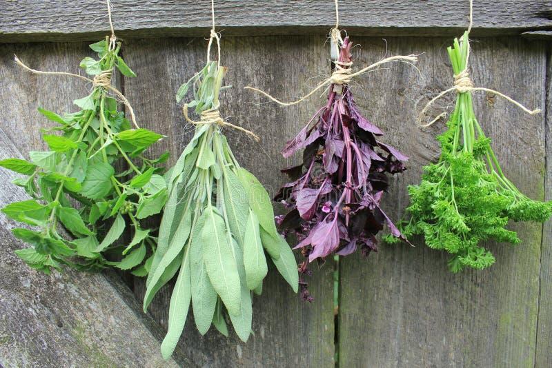 Download Свежие травы вися для сушить Стоковое Фото - изображение насчитывающей хлебоуборка, aromaticity: 33735538