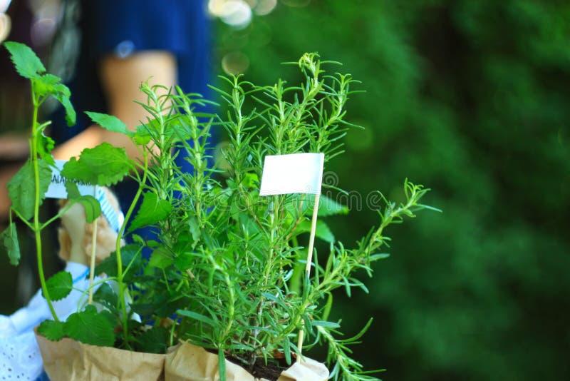 Свежие травы в стойке цветочных горшков и бумаги kraft в farmer& x27; рынок бакалеи s: розмариновое масло, бальзам лимона Модель- стоковые изображения rf