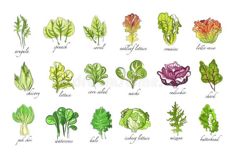 Свежие травы набор, arugula, шпинат, щавель, цикорий, салат, мозоль, bok choy, салат, кресс-салат, заводы листовой капусты вручаю бесплатная иллюстрация