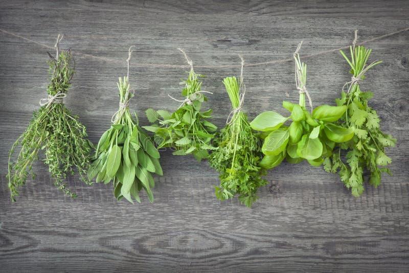 Свежие травы стоковые фото