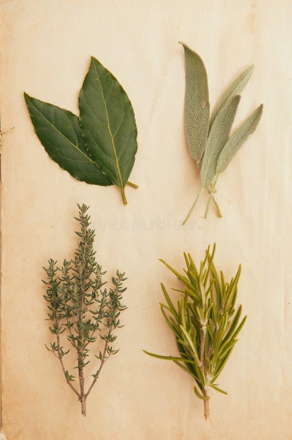 Свежие травы стоковые изображения