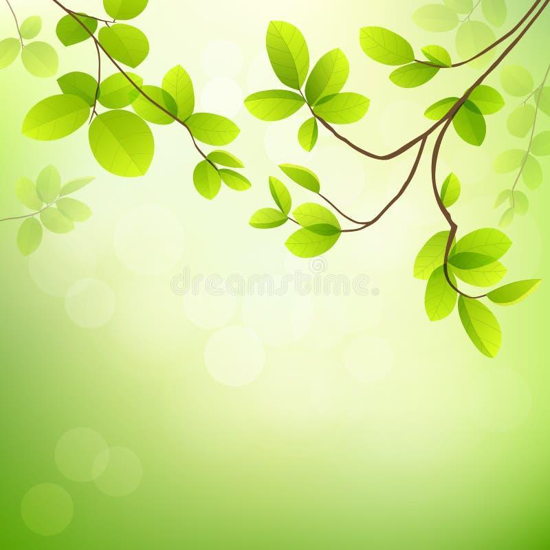 Свежие тропические листья зеленого цвета на естественном иллюстрация вектора