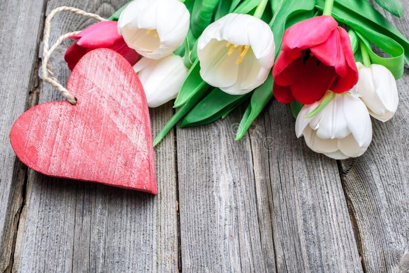 Свежие тюльпаны с красным сердцем стоковое изображение rf