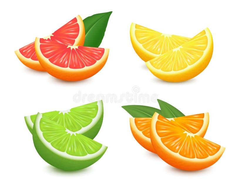 Свежие установленные цитрусовые фрукты Оранжевой иллюстрация вектора лимона грейпфрута изолированная известкой реалистический век иллюстрация штока