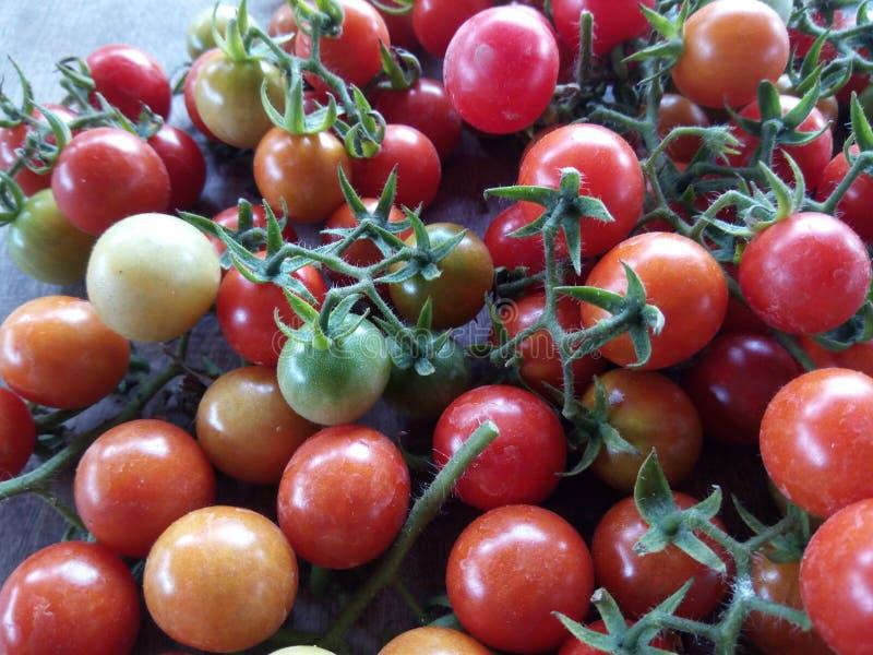 Свежие фрукты и veggie томата вишни стоковые фотографии rf