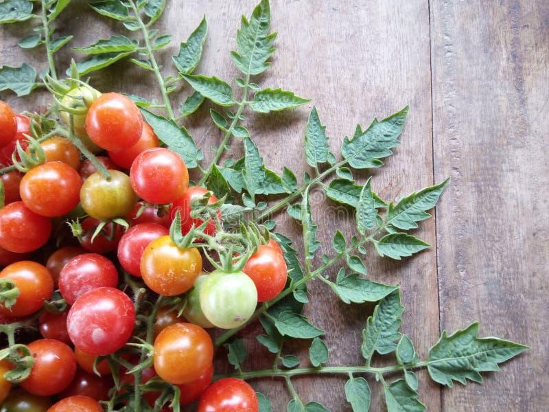 Свежие фрукты и veggie томата вишни стоковое изображение