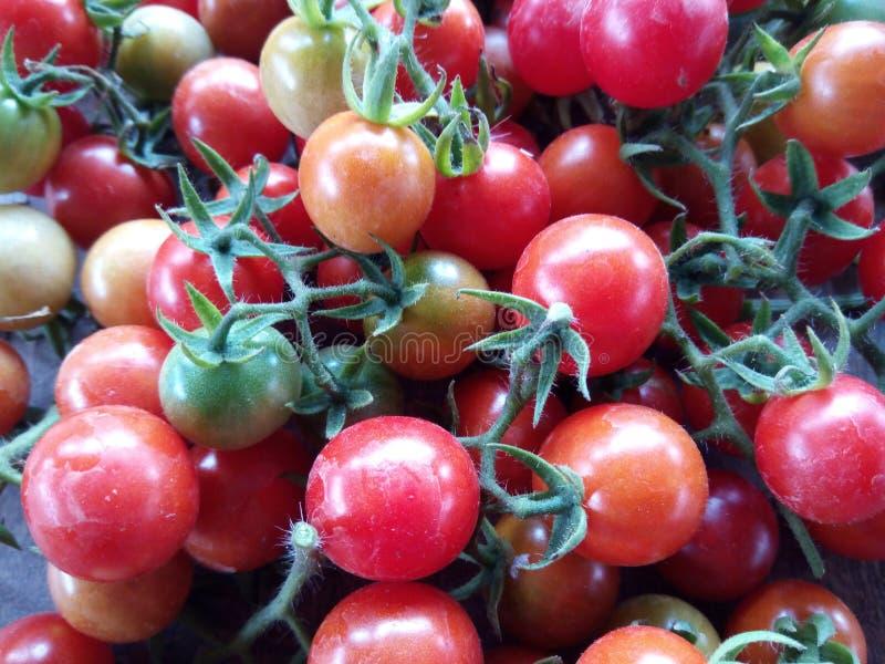 Свежие фрукты и veggie томата вишни стоковые изображения rf