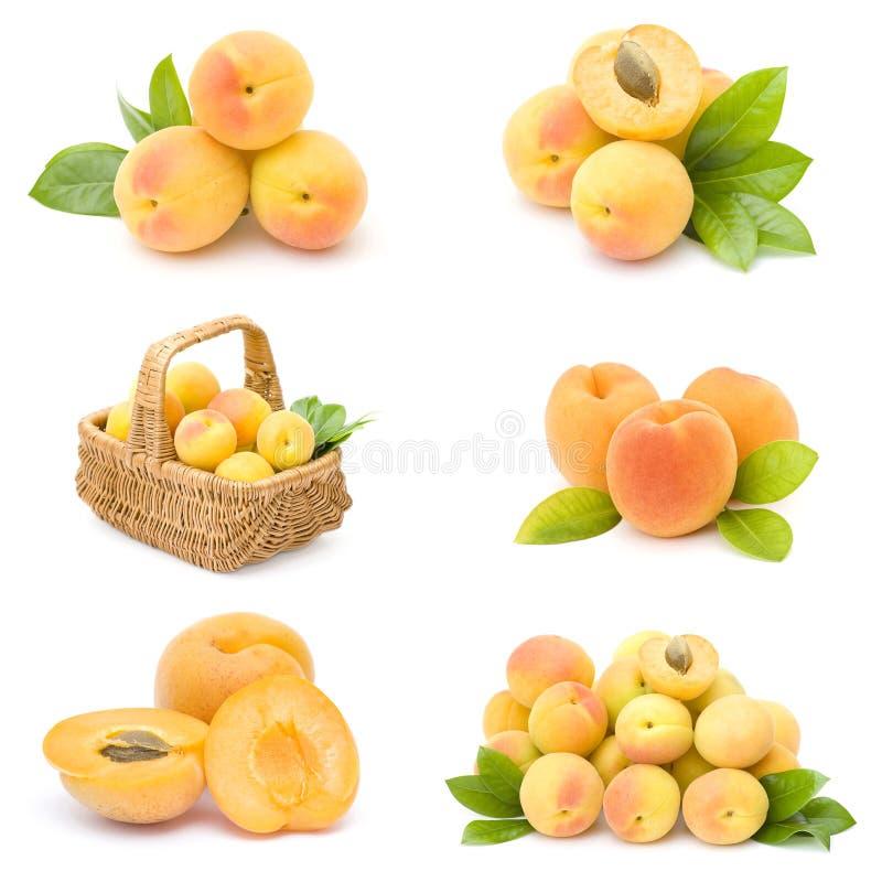 свежие фрукты собрания абрикоса стоковое изображение