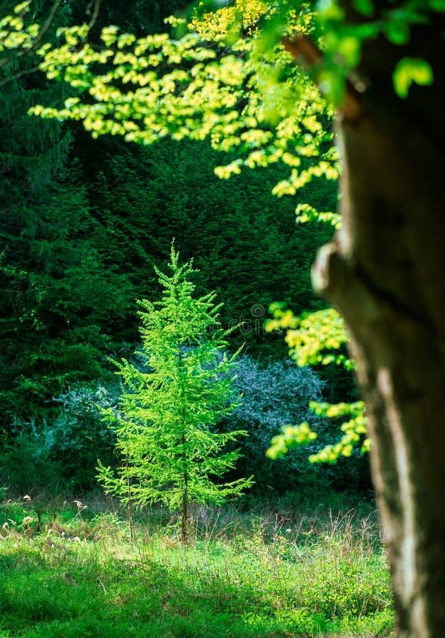 Свежие цвета леса весны стоковое фото rf