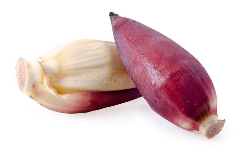 Свежие цветки банана с поперечными сечениями на белизне стоковая фотография
