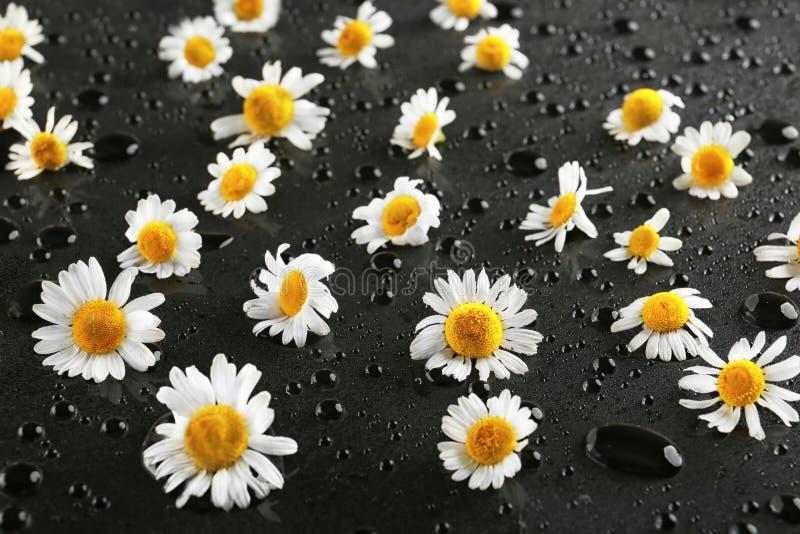 Свежие цветки стоцвета и падения воды на темной таблице стоковая фотография