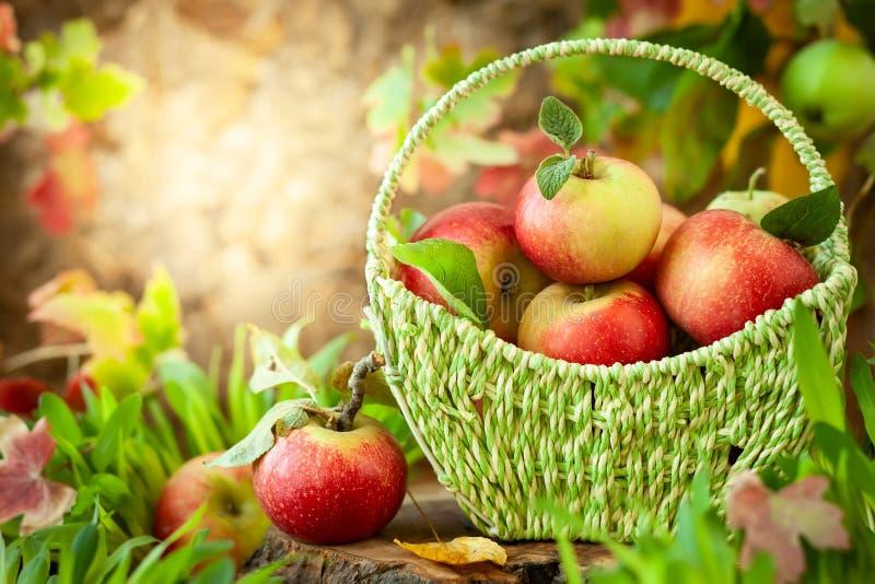 Свежие яблоки в корзине стоковое изображение rf