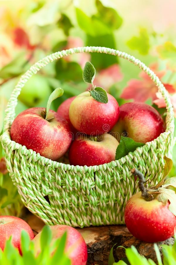 Свежие яблоки в корзине стоковые фотографии rf