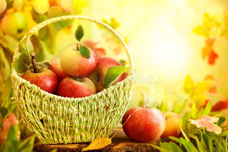 Свежие яблоки в корзине стоковая фотография rf