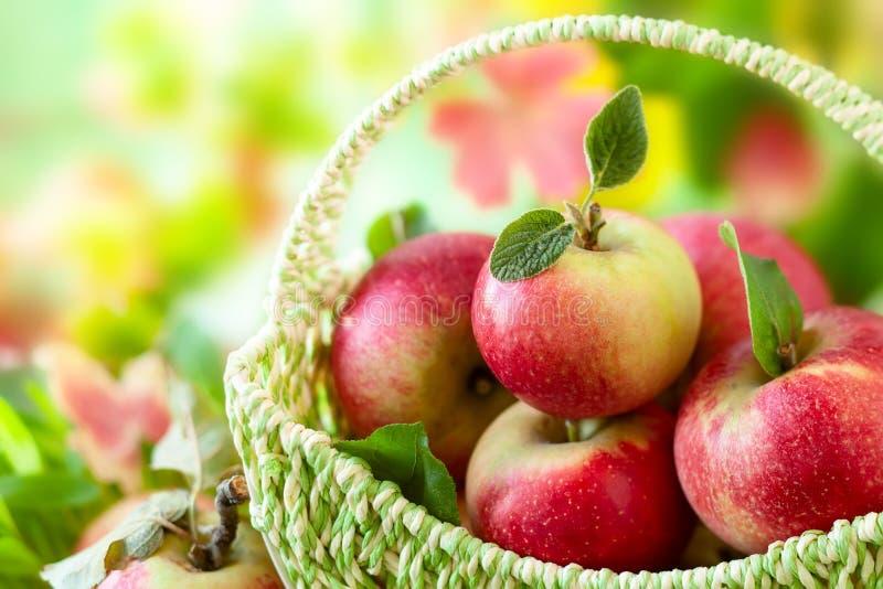 Свежие яблоки в корзине стоковое фото rf