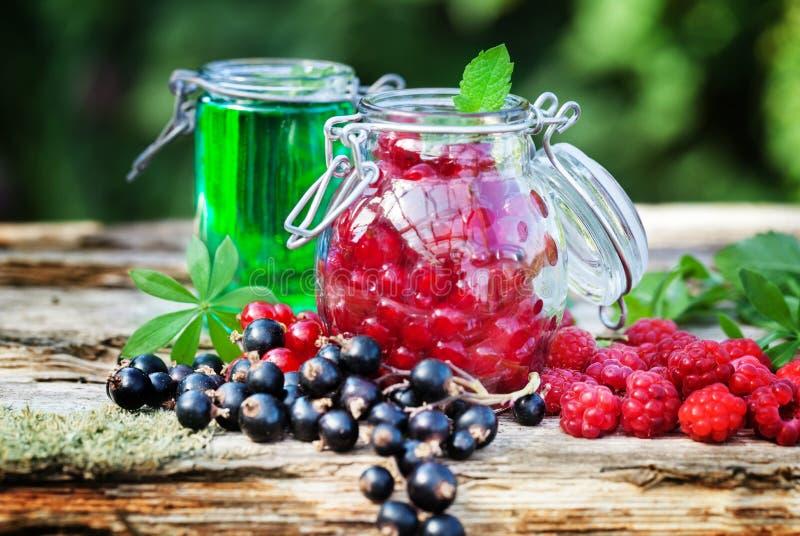 Свежие ягоды и сироп ясменника стоковое фото