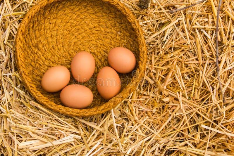 Свежие яичка от фермы в корзине на соломе отделывают поверхность стоковое изображение