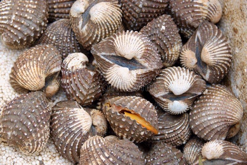 Свежие clams куколей моря показывают для продажи на рынке морепродуктов или тайской еде улицы стоковое фото rf